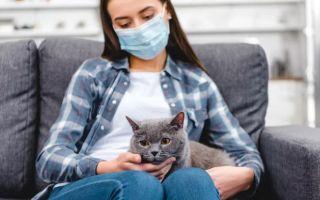 Симптомы коронавируса у человека без кашля
