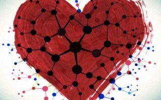 Адреналин и норадреналин — отличия, действия, функции