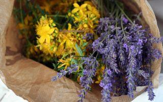 Травы при эндометриозе матки — крапива, чистотел, календула