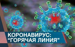 Куда звонить по вопросам коронавируса: круглосуточная горячая линия Covid-19 для россиян
